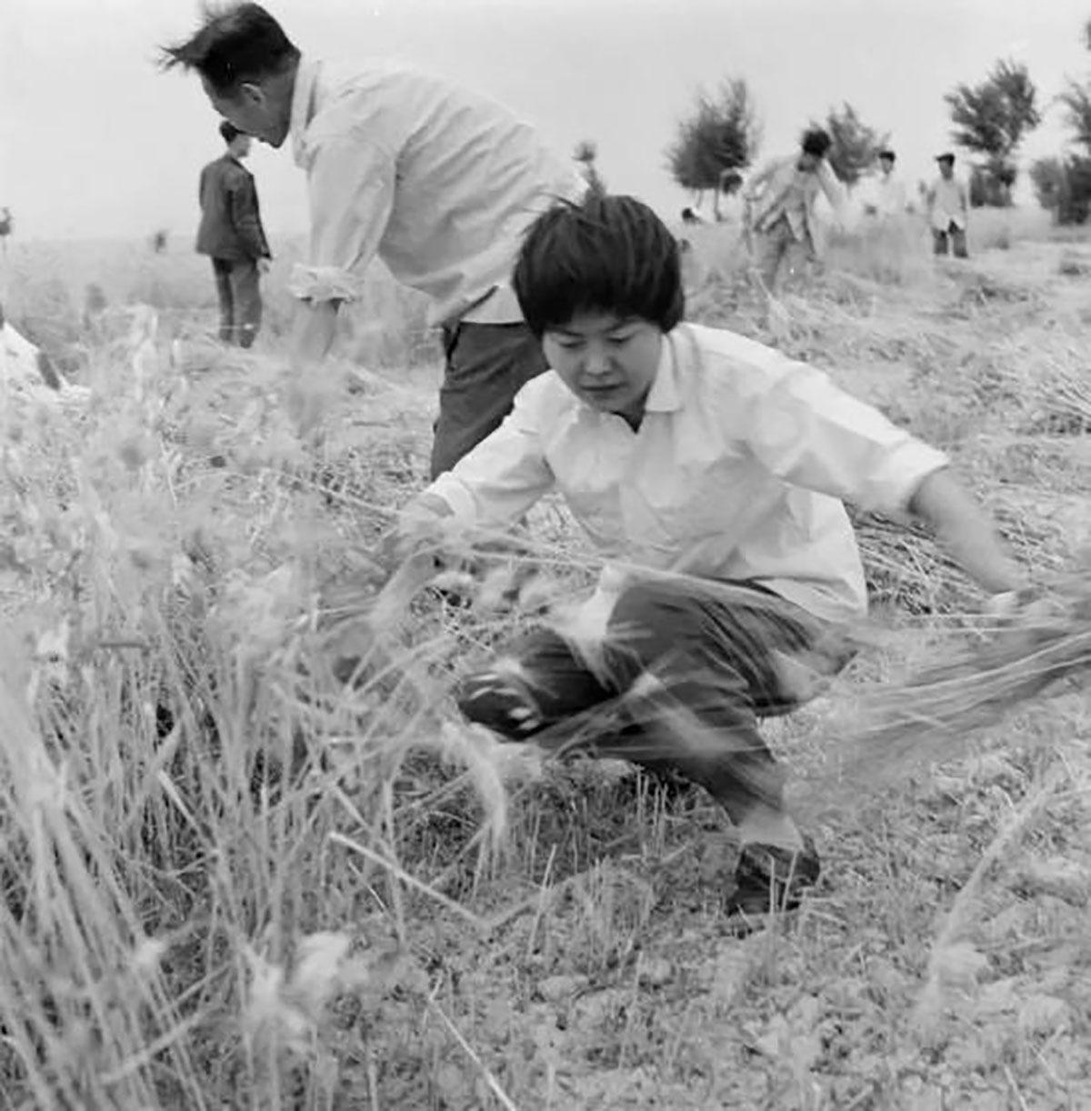 樊錦詩1963年正式進入敦煌研究院工作,當年除了保育石窟,還要兼顧周邊植樹造林,因為水土流失嚴重,會對石窟造成嚴重的侵害,研究員除草植林也是日常工作之一。