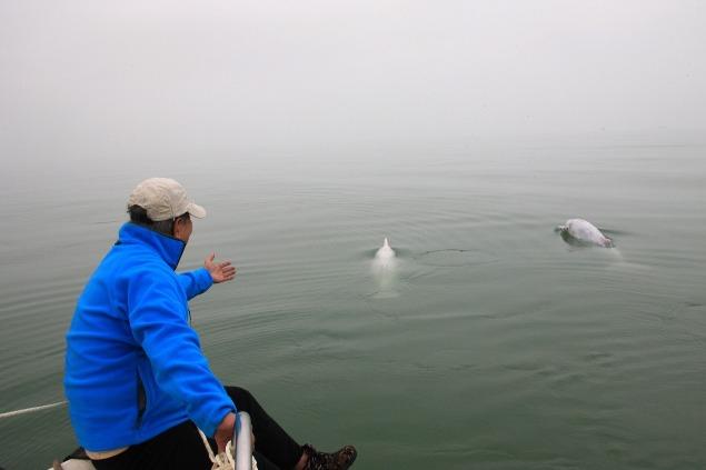 在潘文石推動下,現時在廣西欽州三娘灣有一座白海豚科普館,而中華白海豚保護海域的生態亦不斷改善。