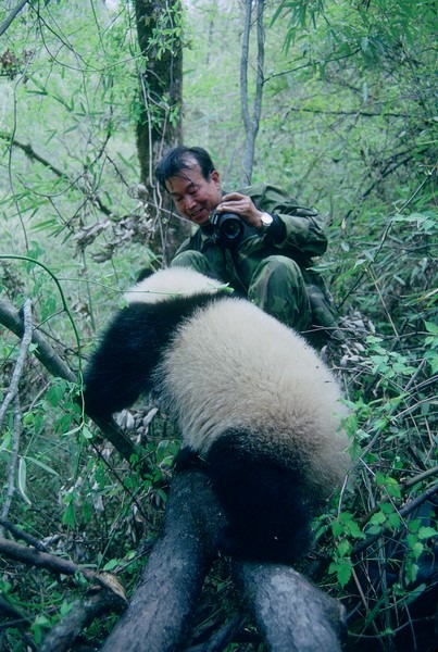 潘文石傾注心力推動中國大熊貓保育,讓他成為第一位,亦是唯一一位登上《國家地理》雜誌封面的中國人。
