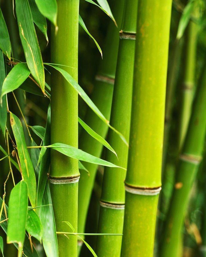 當代中國-傑出名人-前中大教授發現香港獨有植物「秀英竹」胡秀英研發感冒茶「三冬茶」