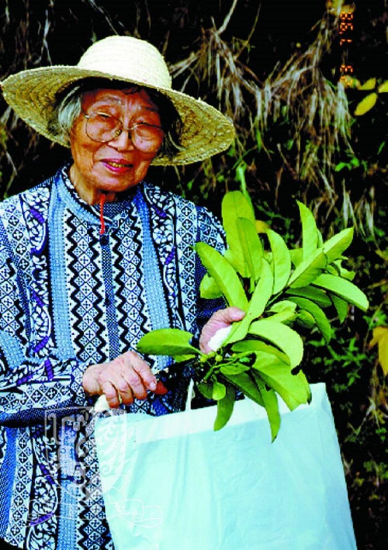 當代中國-傑出名人-前中大教授發現香港獨有植物「秀英竹」 胡秀英研發感冒茶「三冬茶」