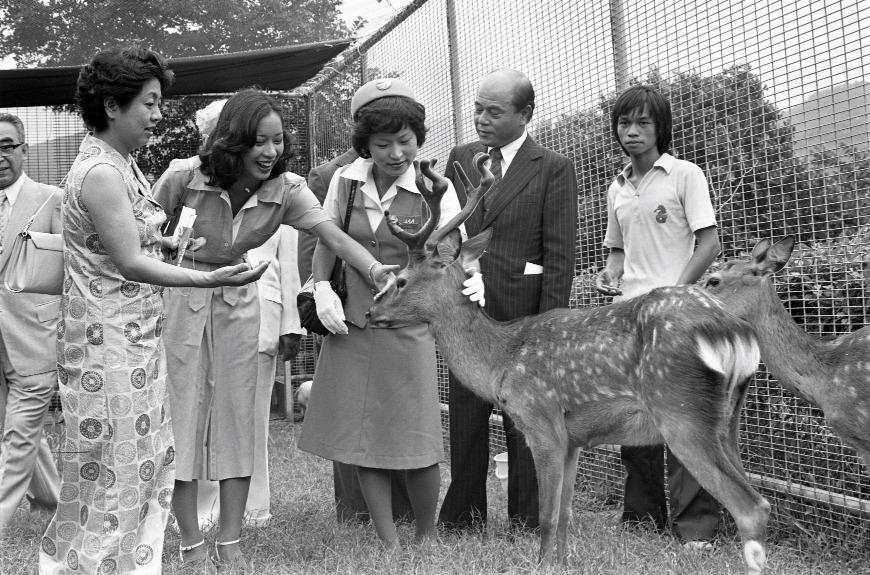 海洋公園剛落成已有很多不同種類的動物。圖為1977年港姐冠軍朱玲玲(左二)到海洋公園親親一頭日本鹿的情況。(圖片來源:Getty)