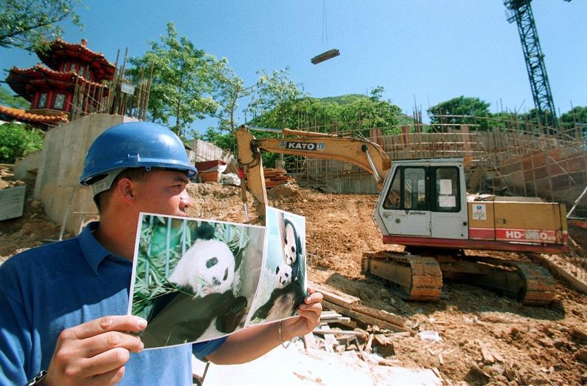 1999年香港回歸兩周年,中央政府向香港送贈一對大熊貓「安安」及「佳佳」,海洋公園為他們興建新居。(圖片來源:Getty)