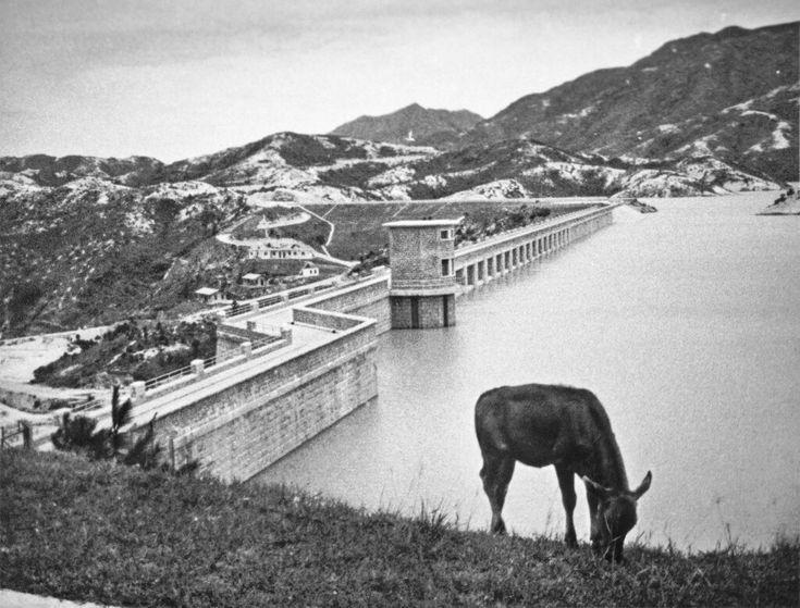 大欖涌水塘興建後,政府並在集水區一帶的山地植森,鞏固地質之餘,亦美化了環境。(網上圖片)