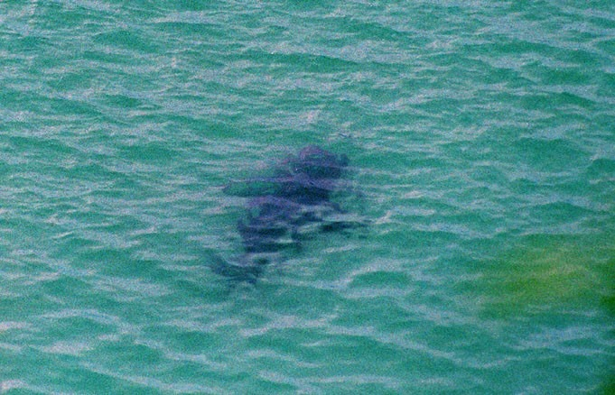 當代中國-名家-鯊魚咬死人 1995年最驚嚇
