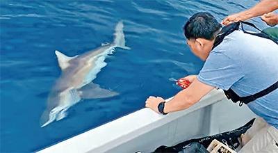 當代中國-名家-鯊魚咬死人1995年最驚嚇