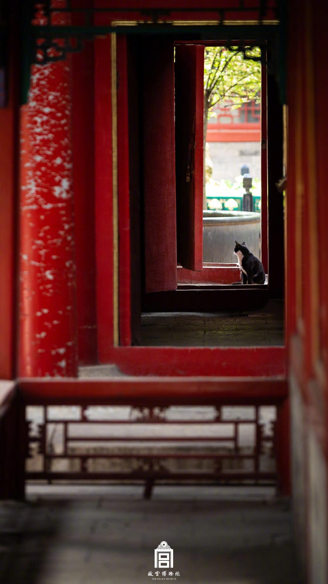 中國文化-故宮年輕人04