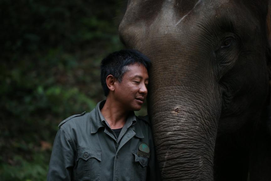 雲南野生大象保育03