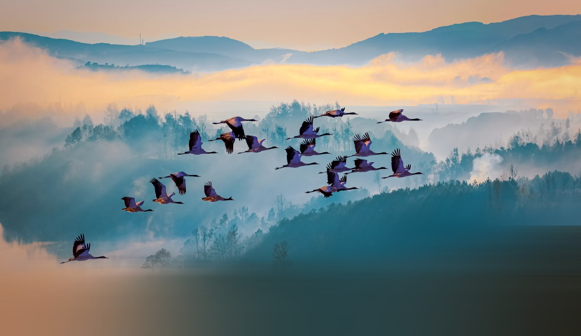 當代中國-數字中國-黑頸鶴