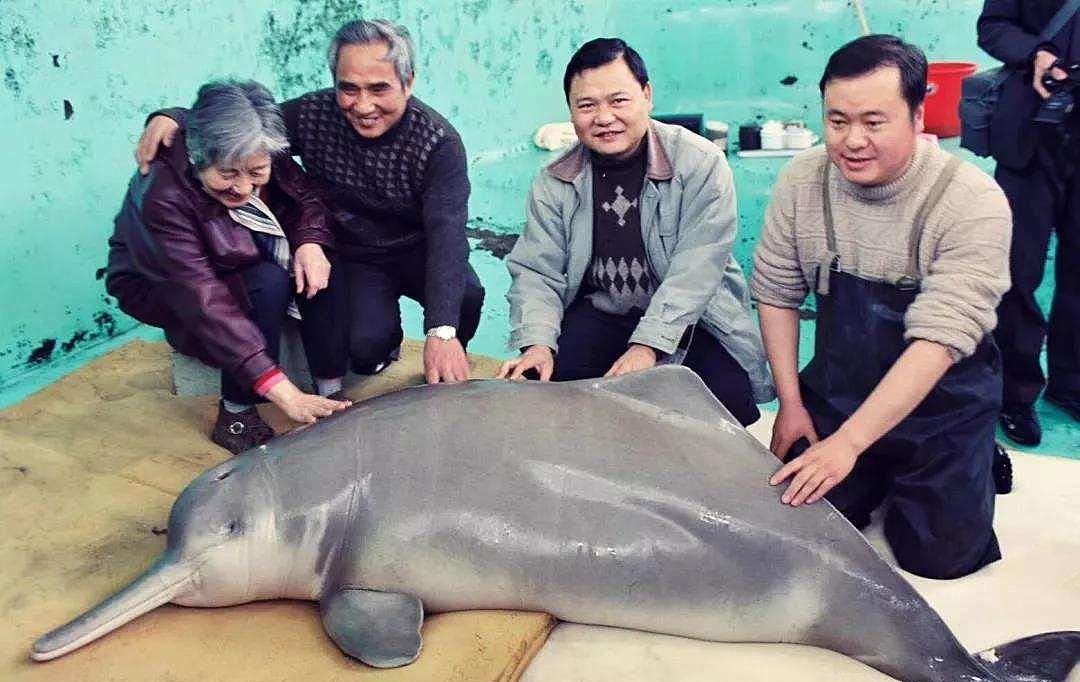 當代中國-中國瀕危動物-白鰭豚