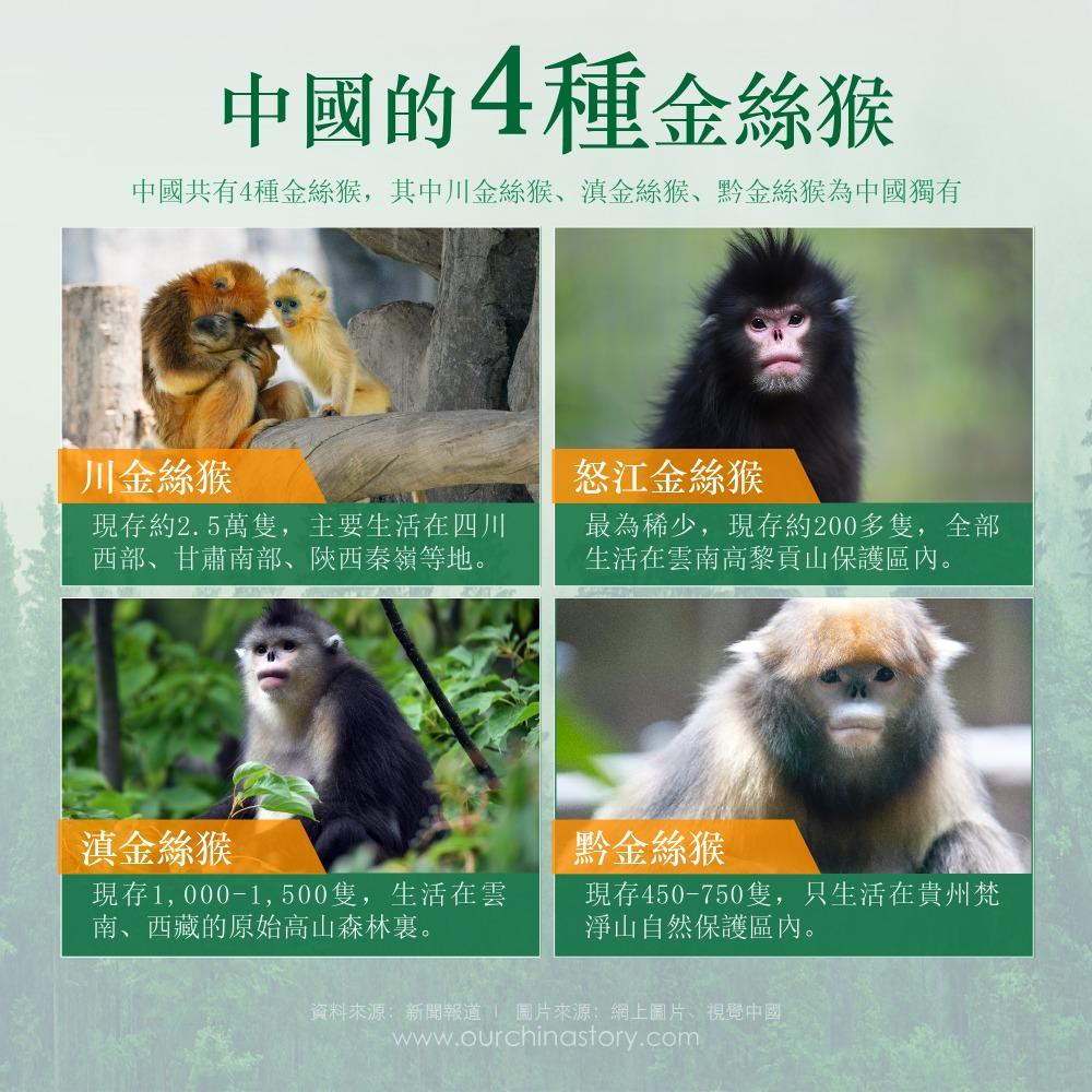 當代中國-瀕危動物-金絲猴