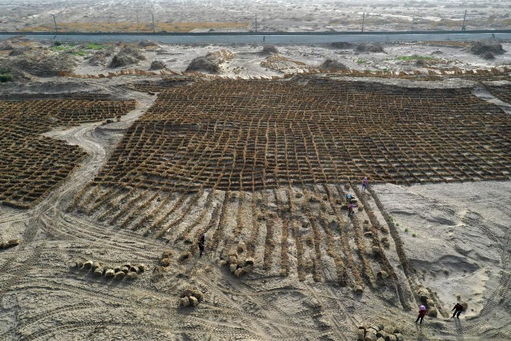 當代中國-沙漠綠化帶-治沙企業