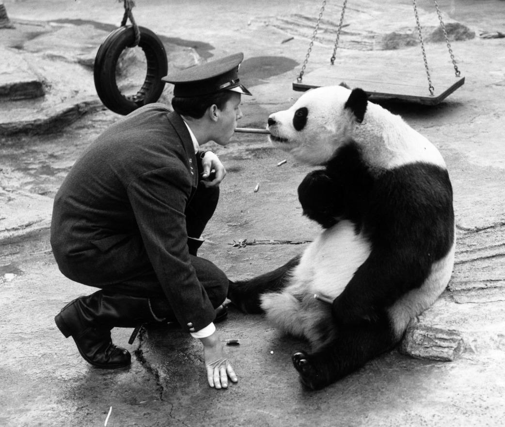 當代中國-中國瀕危動物-大熊貓