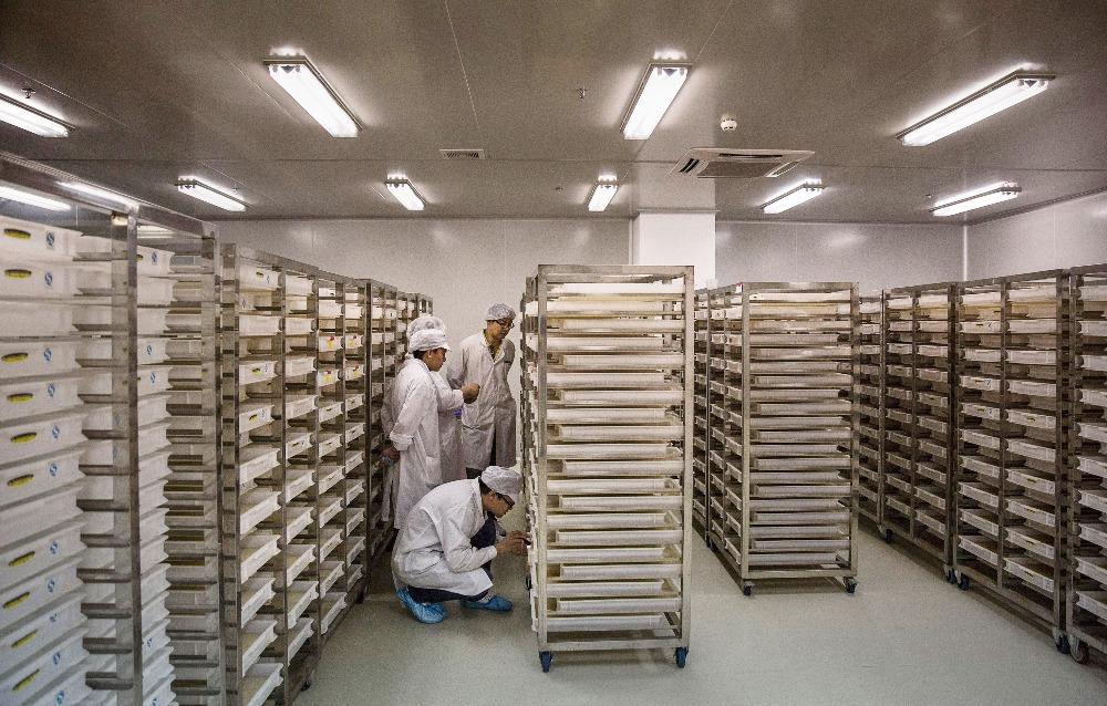 當代中國-趣味數字-廣州蚊子工廠
