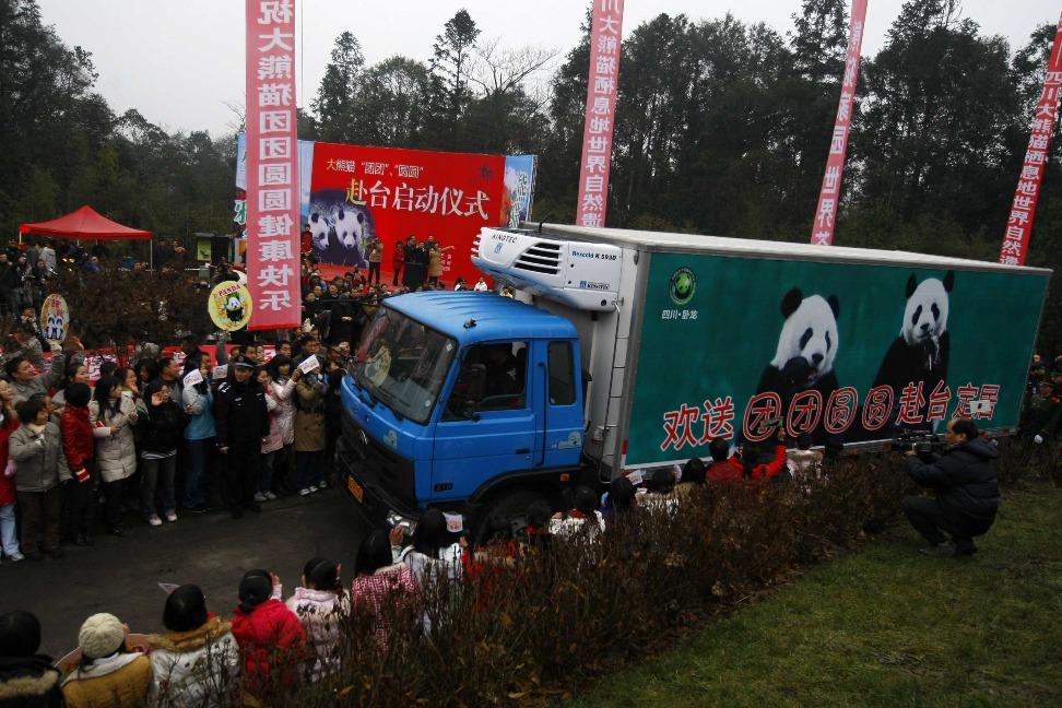 2008年,四歲的大熊貓團團、圓圓離開四川,遷到台北居住。(圖片來源:Getty)