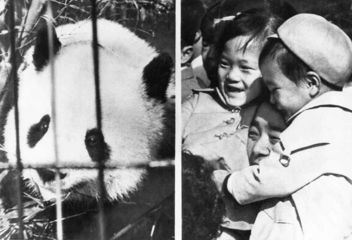 1972年9月,中國向復恢邦交的日本送贈兩隻名為「蘭蘭」和「康康」的大熊貓,當年日本報章更以「等了一整夜,見面一分鐘」,形容民眾參觀的盛況。圖片攝於1972年東京上野動物園。(圖片來源:AP)