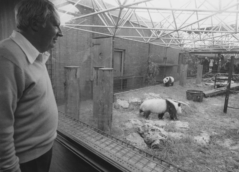 1974年,英國前首相愛德華‧希思(Edward Heath)在倫敦動物園探望來自中國的大熊貓「佳佳」和「晶晶」。(圖片來源:Getty)
