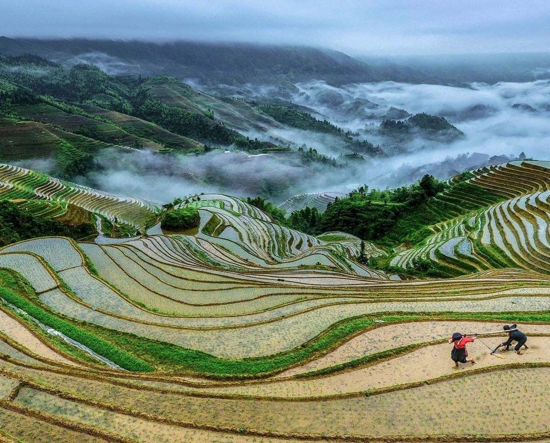 當代中國-中國旅遊-中國文化-廣西-桂林-龍脊梯田1