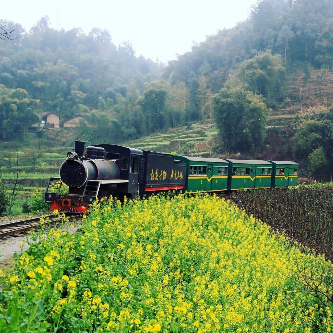 當代中國-中國旅遊-中國文化-四川-花海-嘉陽-旅遊-1