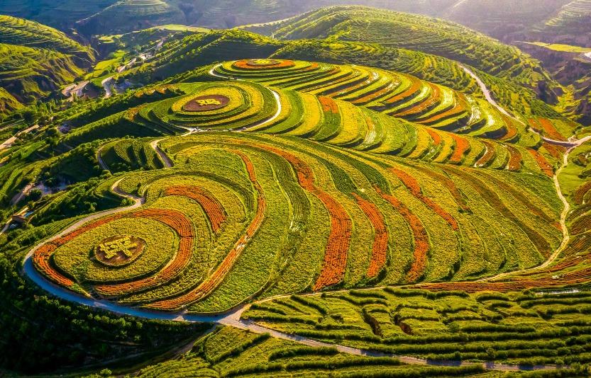 當代中國-中國旅遊-中國文化-寧夏-金雞坪-梯田-1