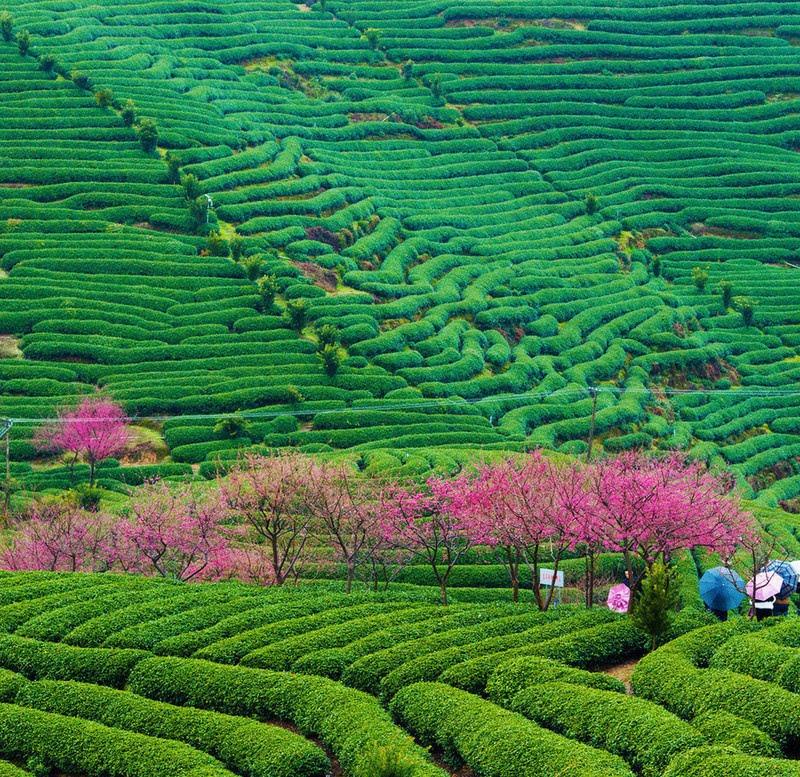 當代中國-中國旅遊-中國文化-福建-台灣-兩岸-創業-1