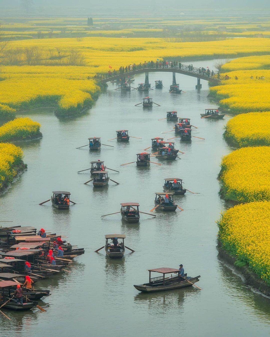 當代中國-中國旅遊-中國文化-江蘇旅遊-花海-中國農業-興化垛田-1