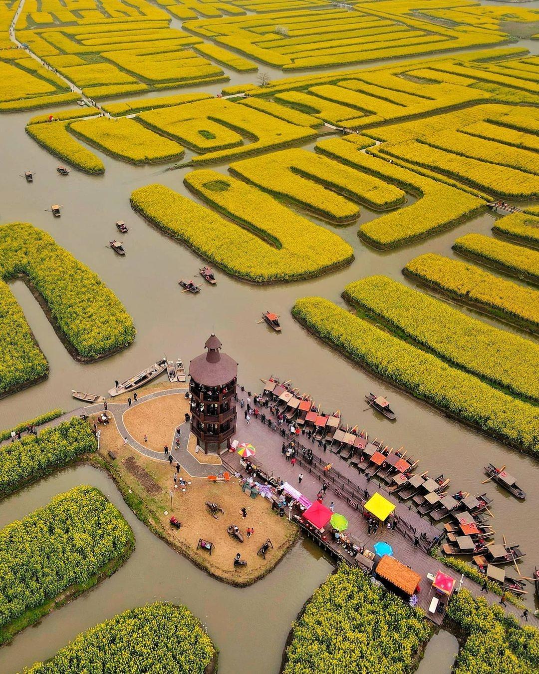 當代中國-中國旅遊-中國文化-江蘇旅遊-花海-中國農業-興化垛田-3