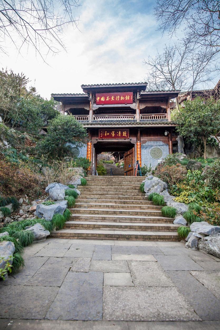 當代中國-中國旅遊-中國文化-茶-中國茶-B-2