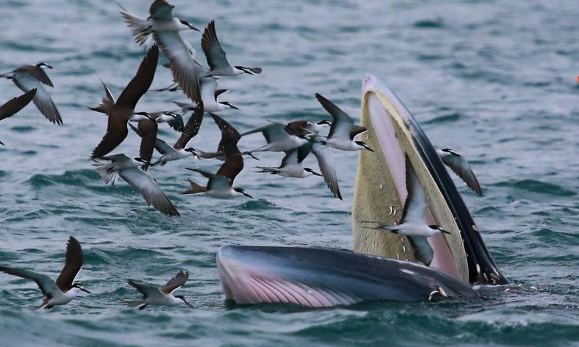 社會民生-深圳鯨魚1