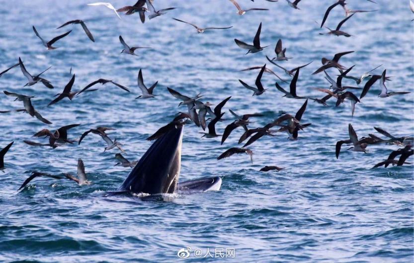社會民生-深圳鯨魚3