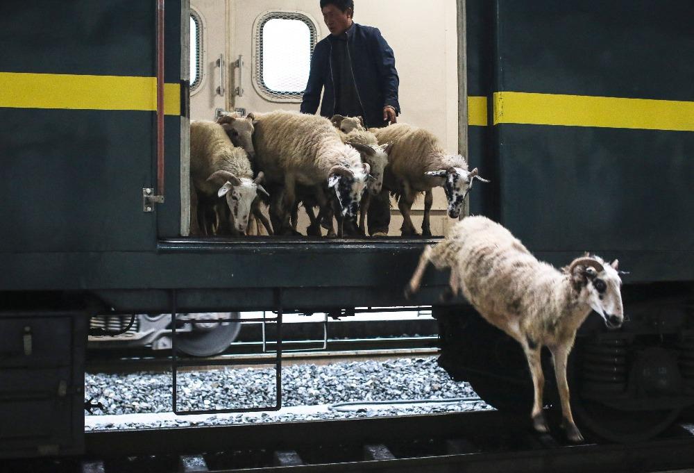 當代中國-綠皮火車數量