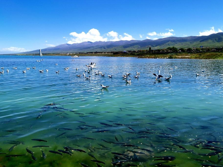 當代中國-統計中國-青海湖面積擴大
