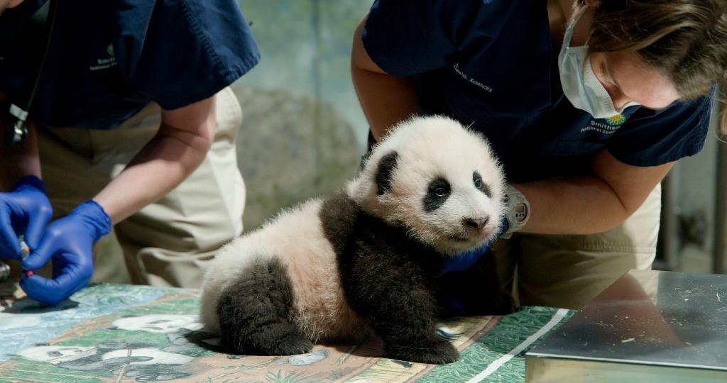 當代中國-每日新聞-熊貓美香