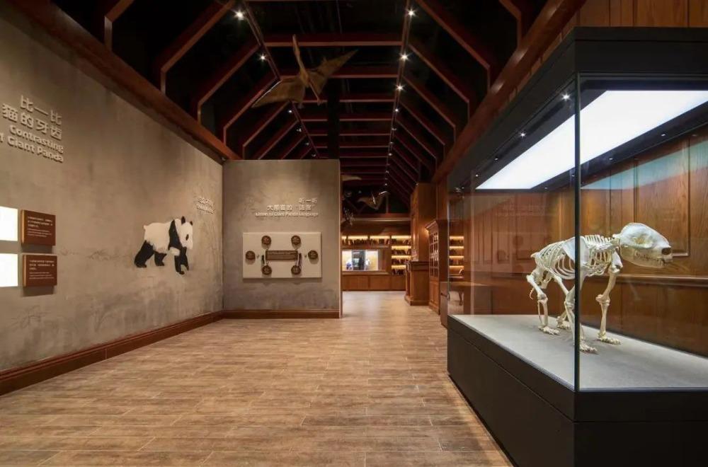 當代中國-中國新聞-熊貓博物館2
