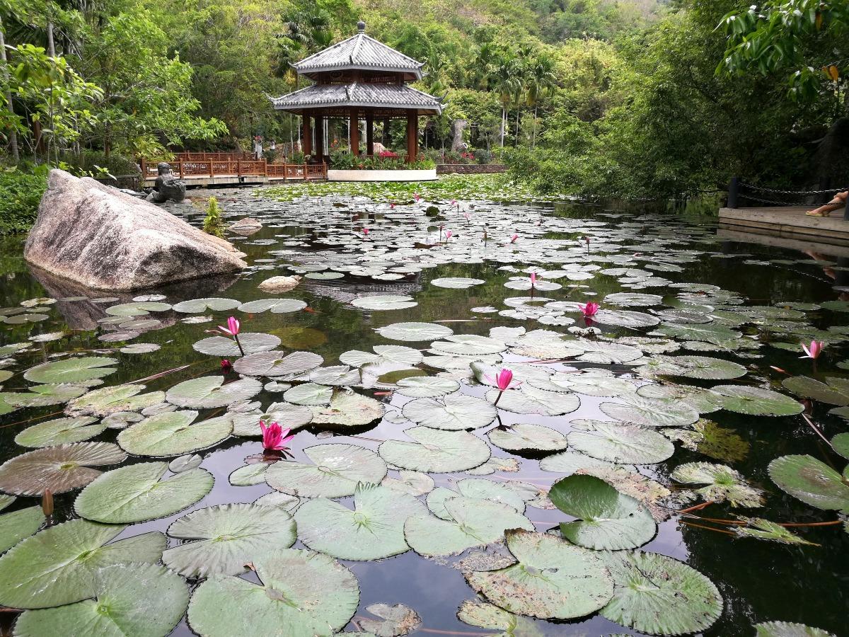 蘇州園林的特點是好像一幅完美圖畫,包括拙政園、網師園、留園、滄浪亭、獅子林等著名景點,以園林建築而言,包圍著的山水、名花、樹木互不相同,各有特點,發揮出中華造林的藝術結晶。