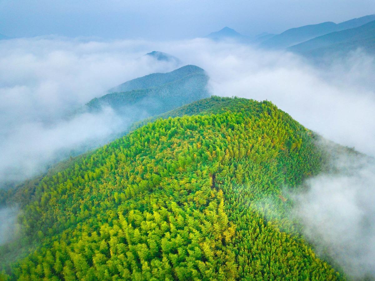 莫干山素有「清涼世界」之美譽,以「清、靜、涼、綠」的天然環境和竹海別墅為主要特色,被譽為「江南第一山」。