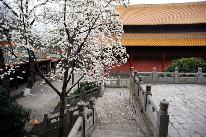 當代中國-文化遺產-體驗文化遺產名城看南京朝天宮玉蘭花開