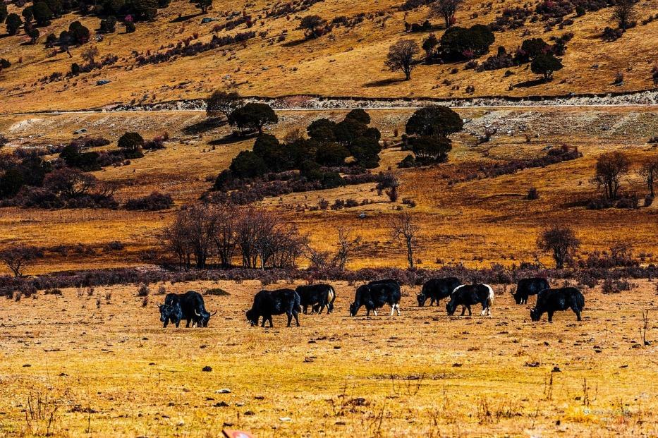 當代中國-潮遊生活-旅遊風物-普達措國家公園