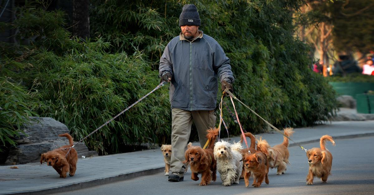 當代中國-中國經濟-寵物經濟-人口老化