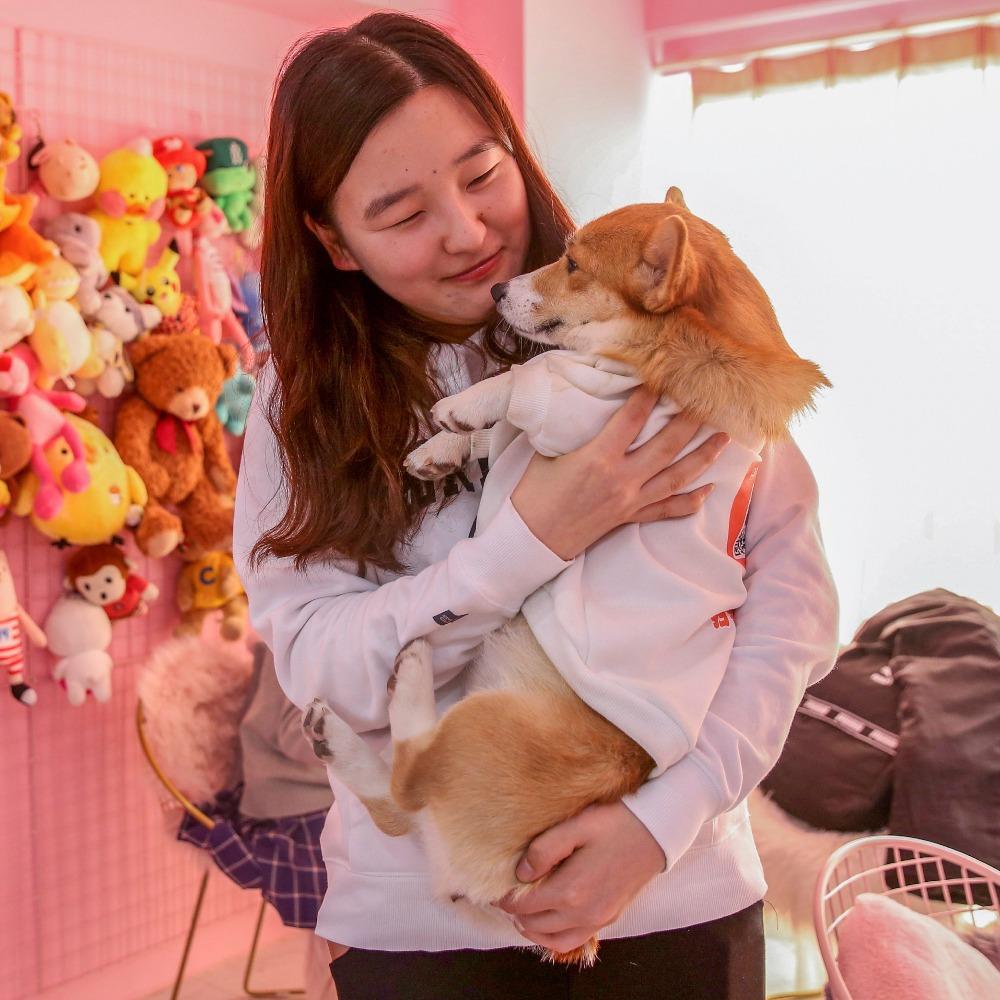 當代中國-中國經濟-千禧時代飼養寵物