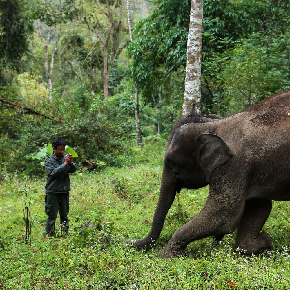 雲南野生象保育
