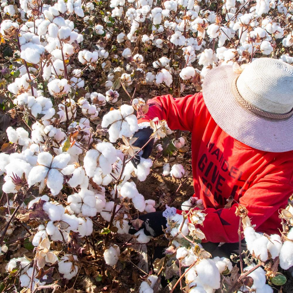 新疆棉花-MUJI宣佈繼續使用