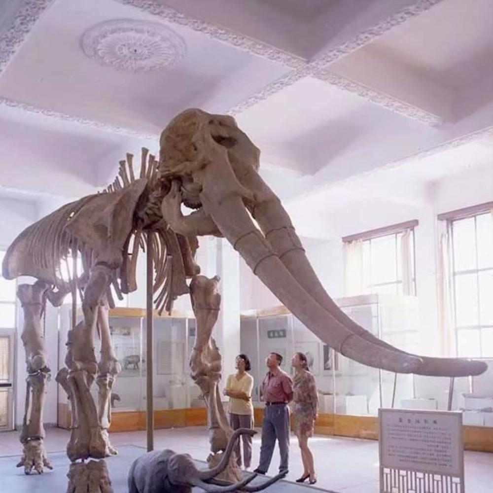 當代中國-當年今日-古象化石