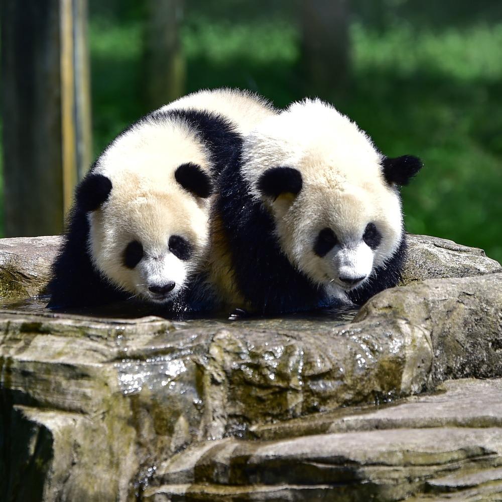 當代中國-當年今日-送贈熊貓