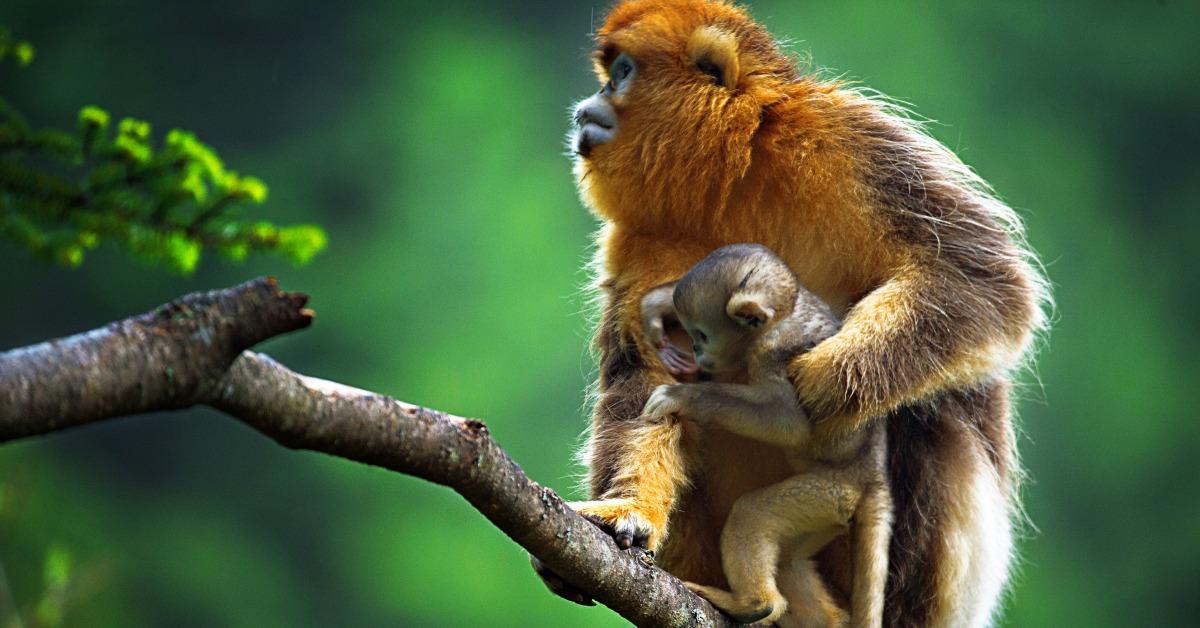 當代中國-當年今日-野生動物名錄