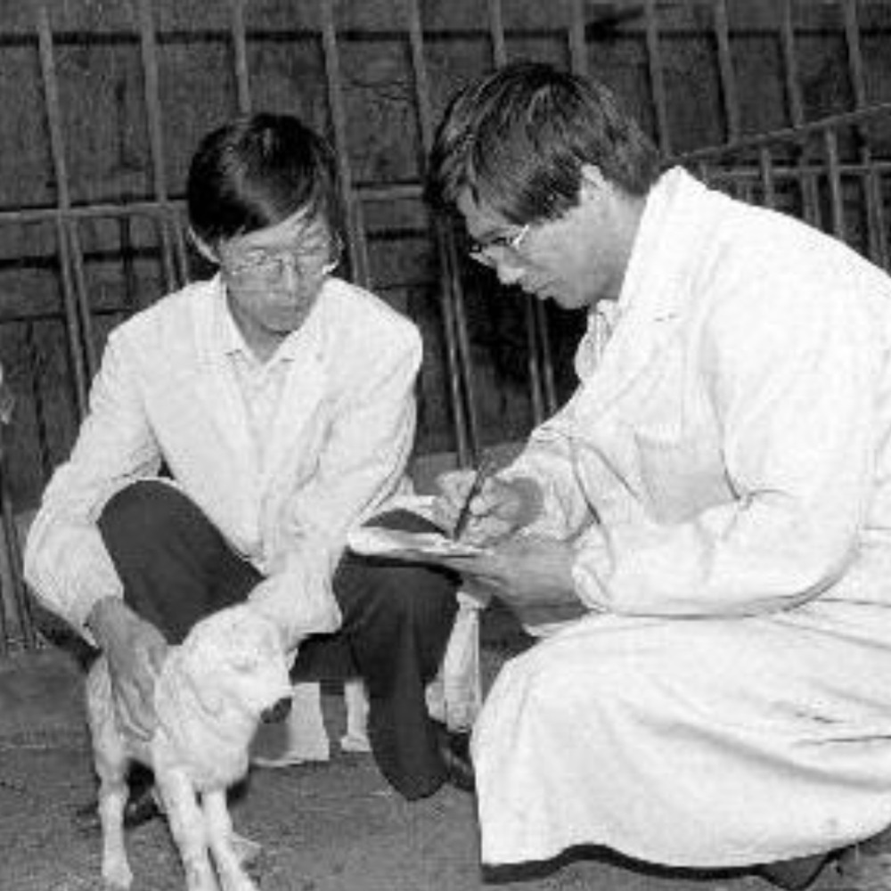 當代中國-當年今日-綿羊冷凍胚胎移植